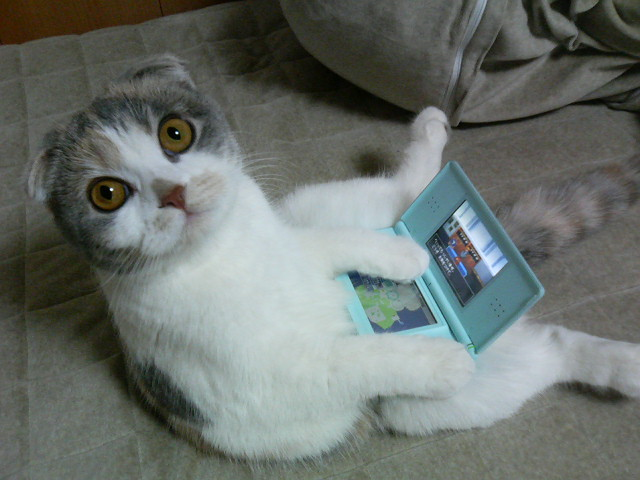 laptop_cat